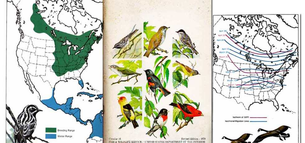 Migration of Birds ~ Free eBook