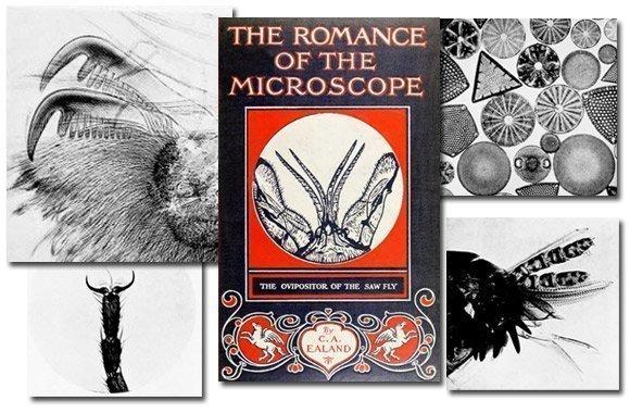 The Romance of the Microscope {Free eBook}