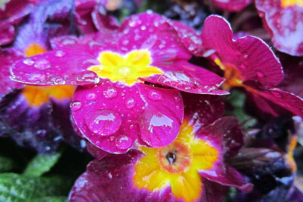 """April Rain"" by Robert Loveman"