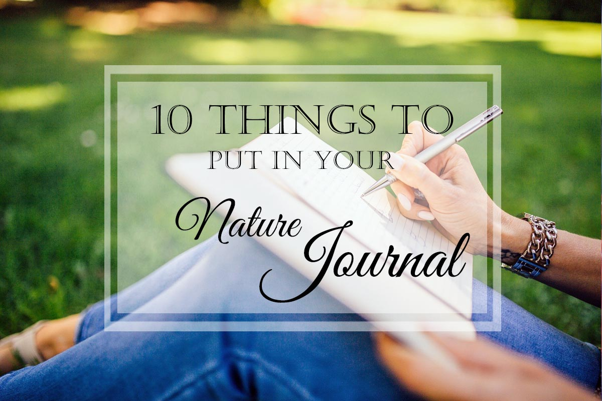 10 Things to Put in Your Nature Journal