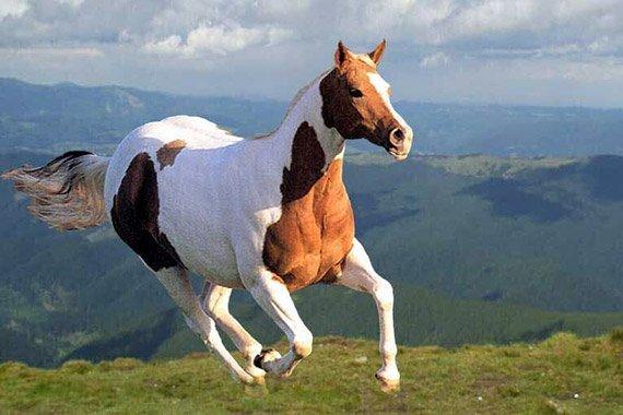 The Horse: A Unit Study