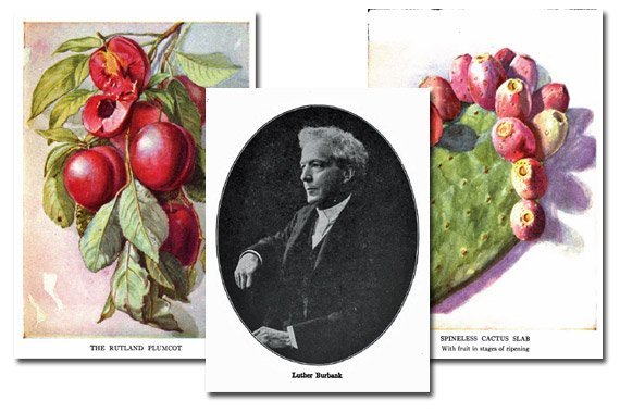 Stories of Luther Burbank and His Plant School {Free eBook}