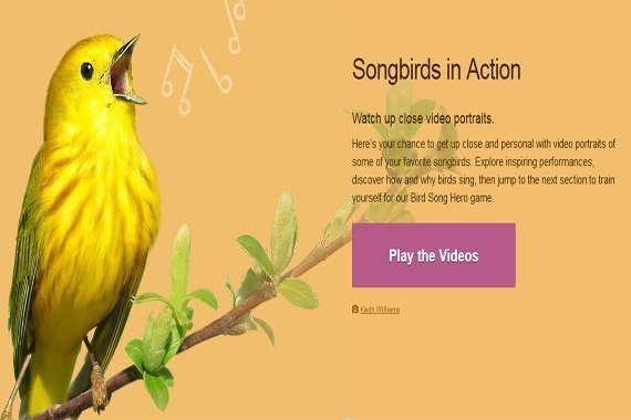 All About Bird Song Interactive + Free Bird Song Download!
