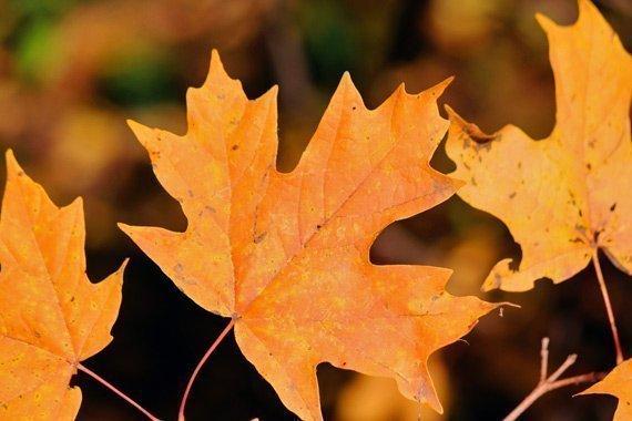 Falling Leaves Unit Study {Free}