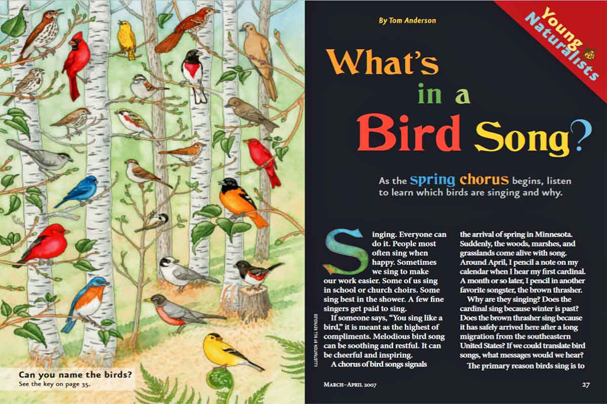 What's In a Bird Song? ~ Free Download
