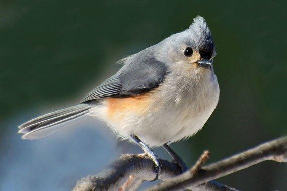 Bird Unit Study {Free}