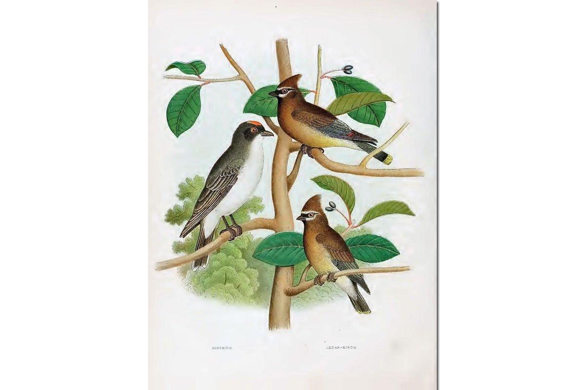 Nests & Eggs: Redwing Blackbird