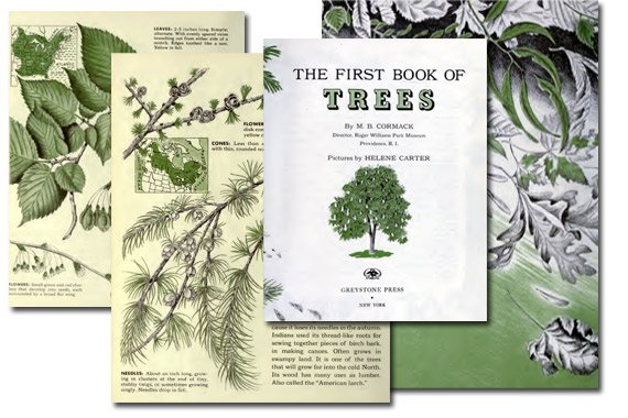The First Book of Trees {Free eBook}