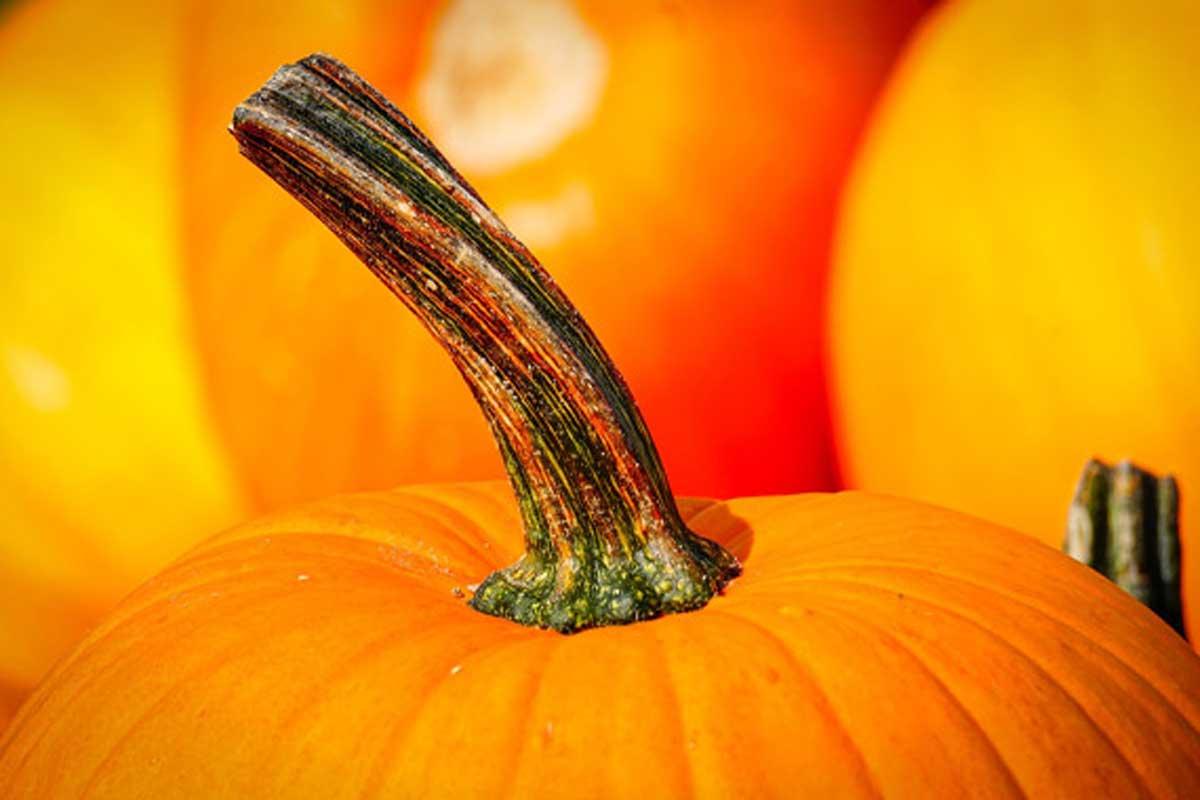 Activity: Make a DIY Pumpkin Bird Feeder