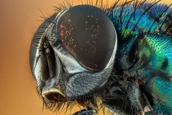 Summer Fun Activity: Bug Scavenger Hunt