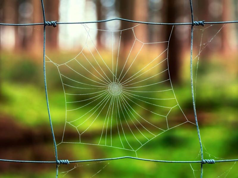 """""""The Spider and the Fly"""" by Mary Howitt"""