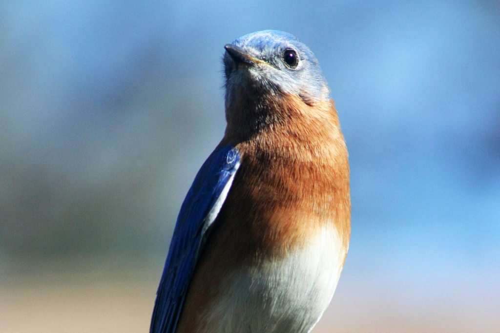 """L'oiseau bleu"" by Coleridge"