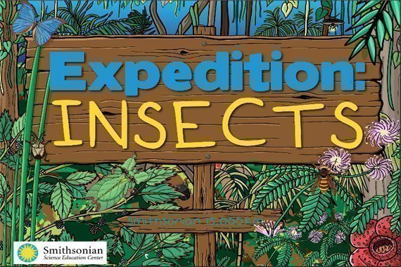 Insect Coloring Book {Free Download}