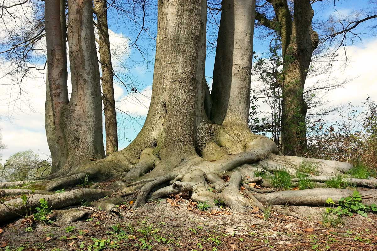 Free Nature Studies: Roots