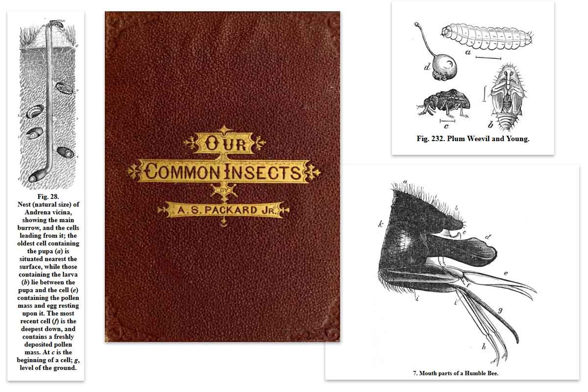 Our Common Insects ~ Free eBook