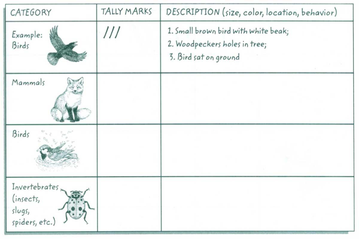 Wildlife Observation Hike Form {Free Download}