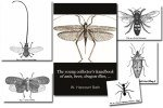 Young Collector's Handbook of Ants, Bees, Etc. {Free Bug eBook}
