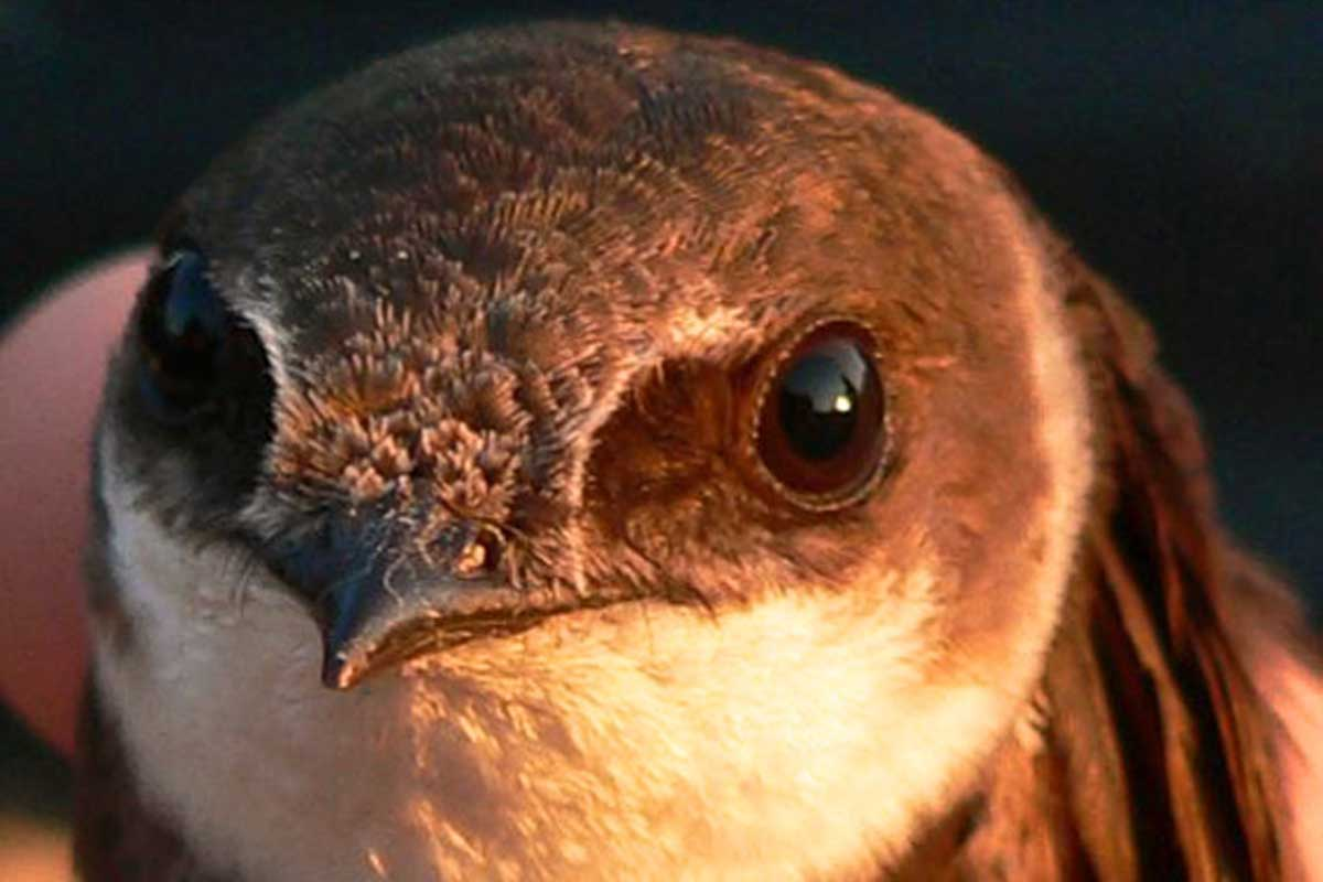 Free Nature Studies: Hunting Birds With Eyes & Camera