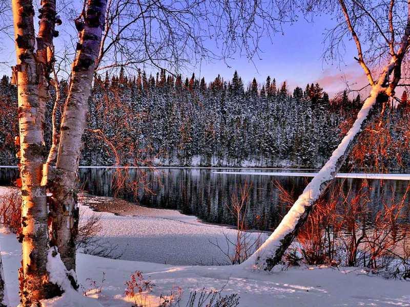 """Birches"" by Robert Frost"