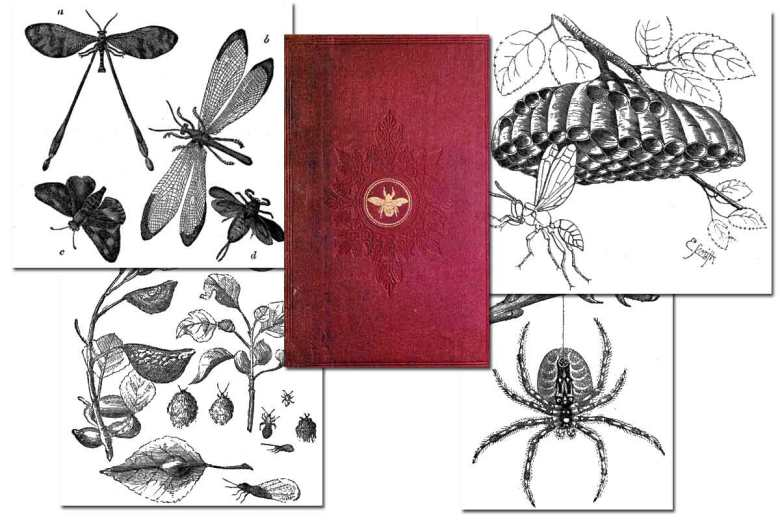 Insect Architecture {Free eBook}