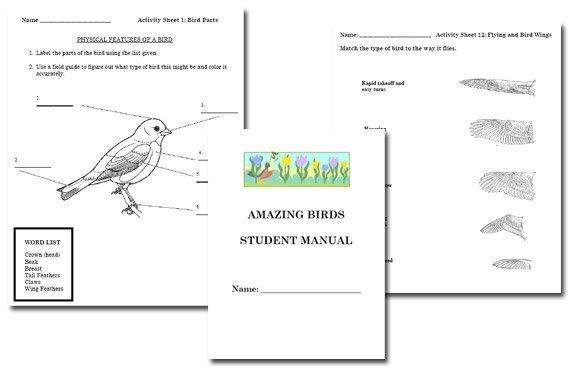 Amazing Birds Student Manual {Free}