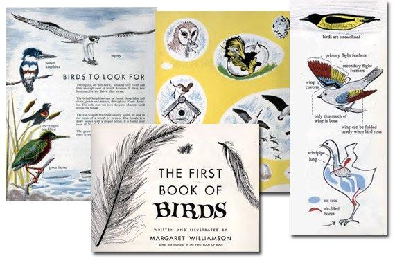 First Book of Birds {Free eBook}