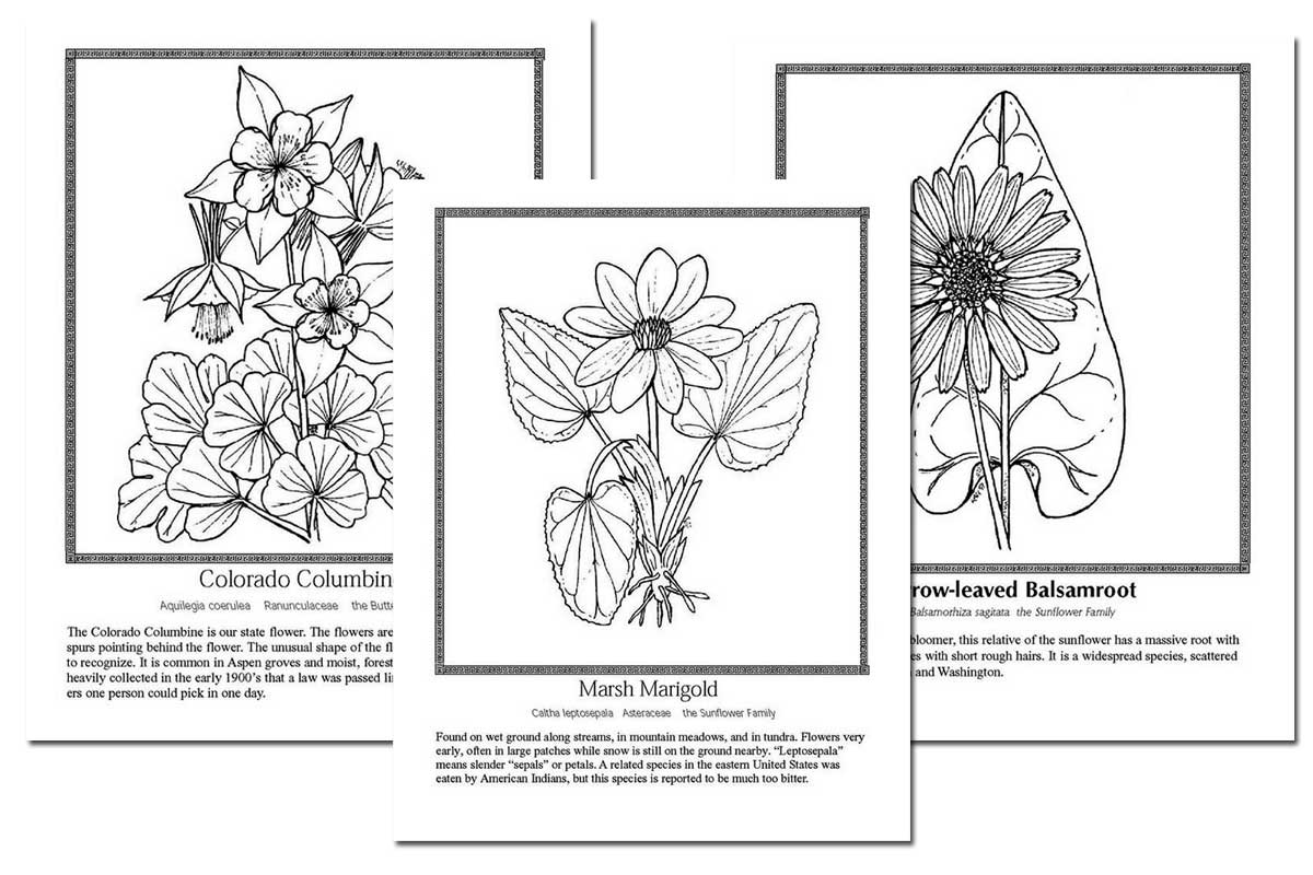 Celebrating Wildflowers Coloring Book ~ Free