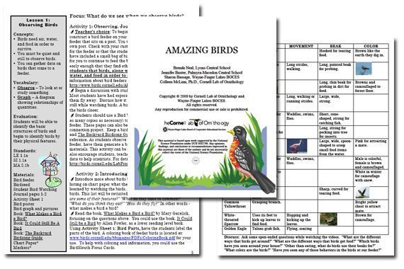 Amazing Birds Teacher Manual {Free}