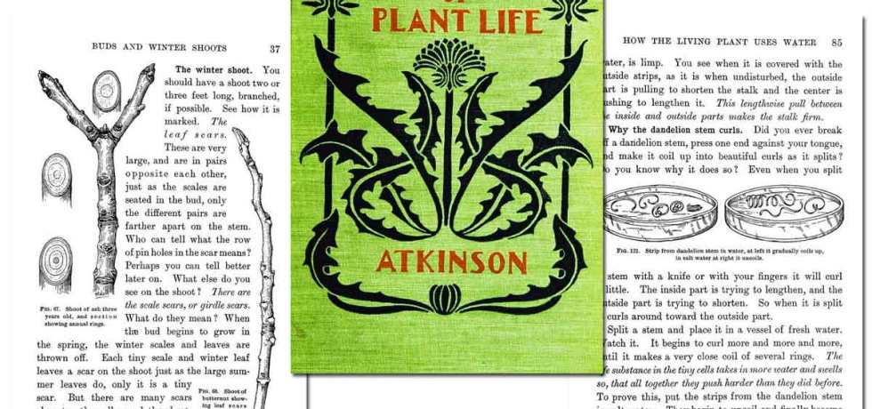 First Studies of Plant Life ~ Free eBook