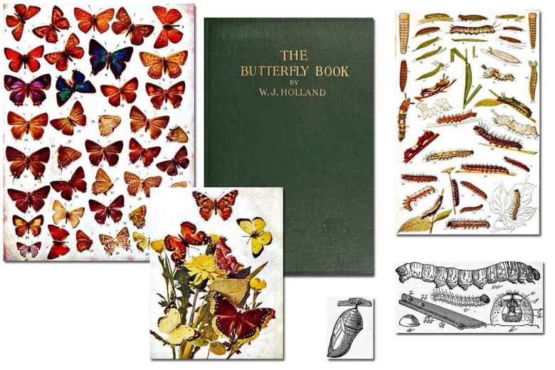 The Butterfly Book ~ Free eBook
