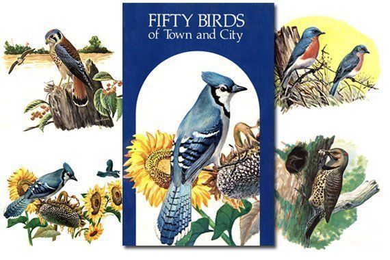 Fifty Birds of Town and City {Free eBook}