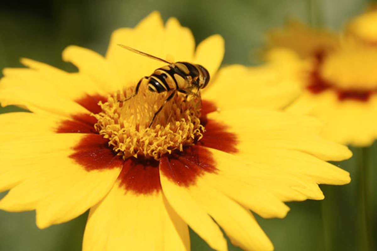 Free Nature Studies: Bees and Flowers (Pollination)