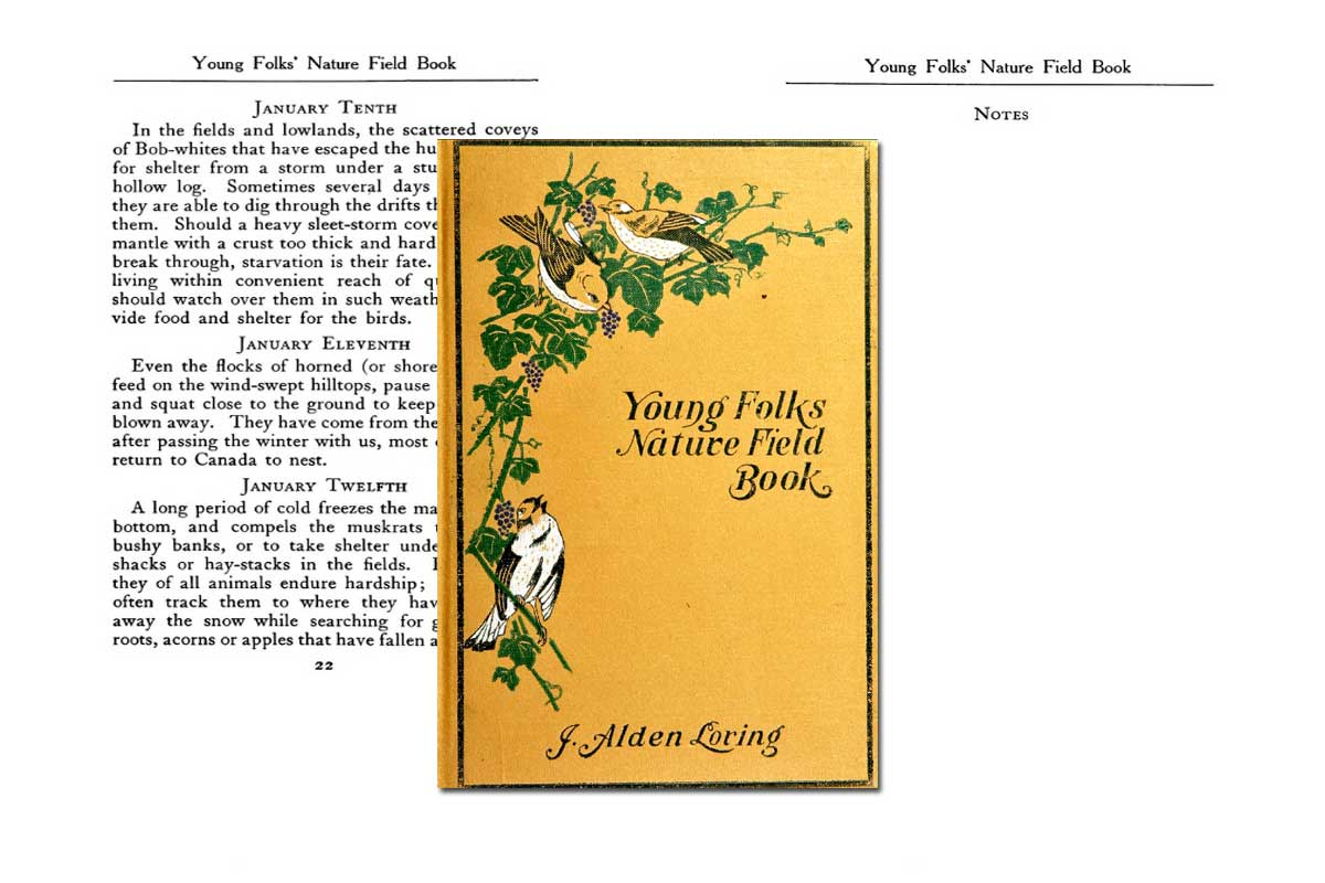 Young Folks' Nature Field Book ~ Free eBook