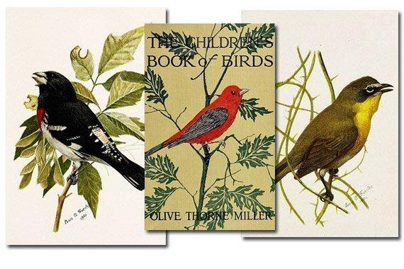 The Children's Book of Birds {Free eBook}
