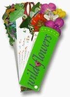Free Nature Studies: Wildflowers