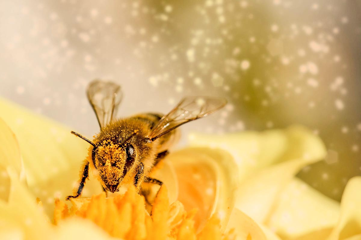 Free Unit: A Honey of a Unit Study