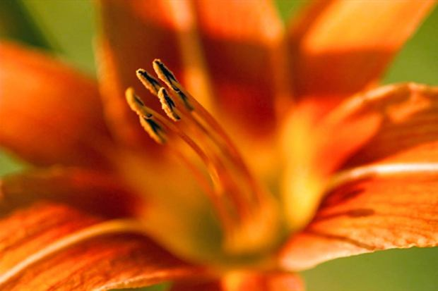 Free Nature Studies: A Plant & Its Flower