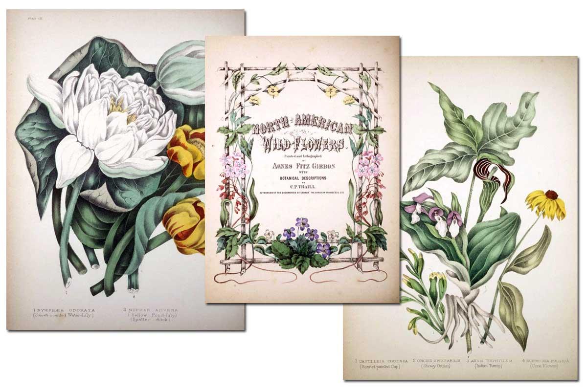 North American Wildflowers {Free eBook}