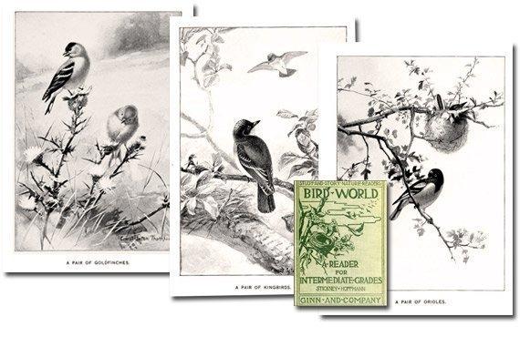 Bird World: A Bird Book For Children {Free eBook}