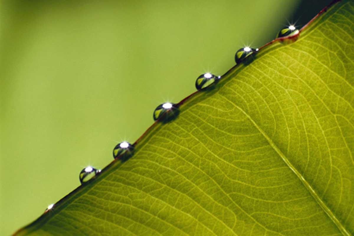 Free Nature Studies: Green Leaf Factories (Leaves)