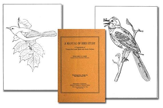 A Manual of Bird Study {Free eBook}