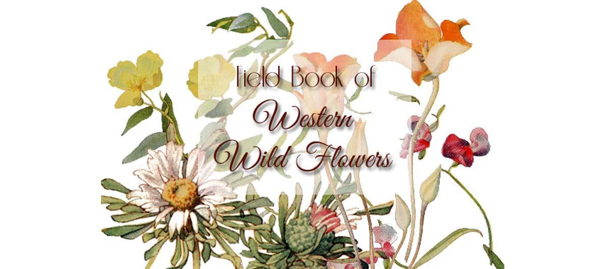 Field Book of Western Wild Flowers {Free eBook}