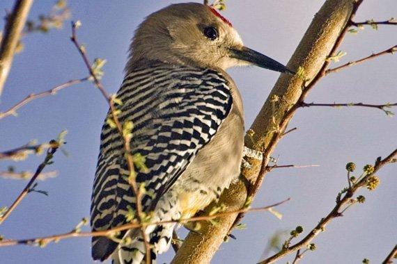 Bird Facts Notebooking Sheet {Free}