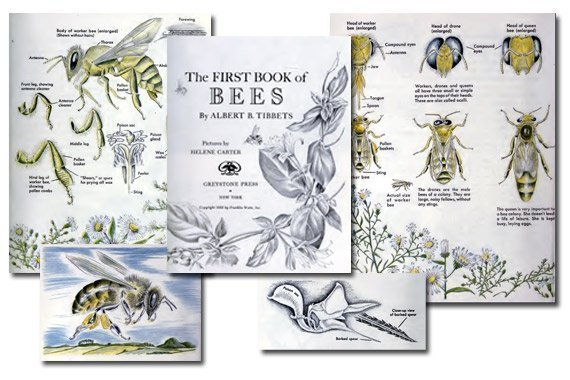 The First Book of Bees {Free eBook}