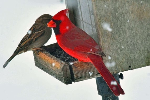 Activity: Make a Bird Feeder