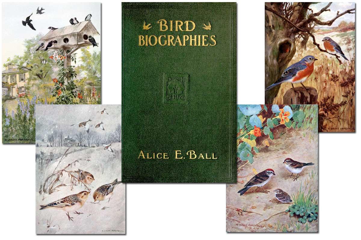 Bird Biographies {Free eBook}