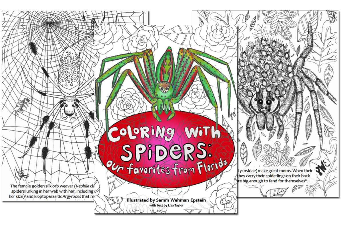 Coloring with Spiders ~ Free Download