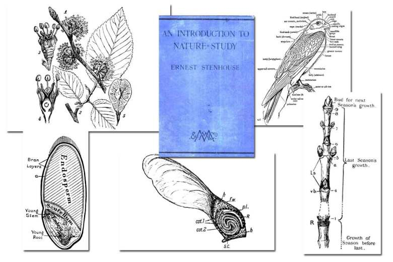 An Introduction to Nature Study ~ Free eBook