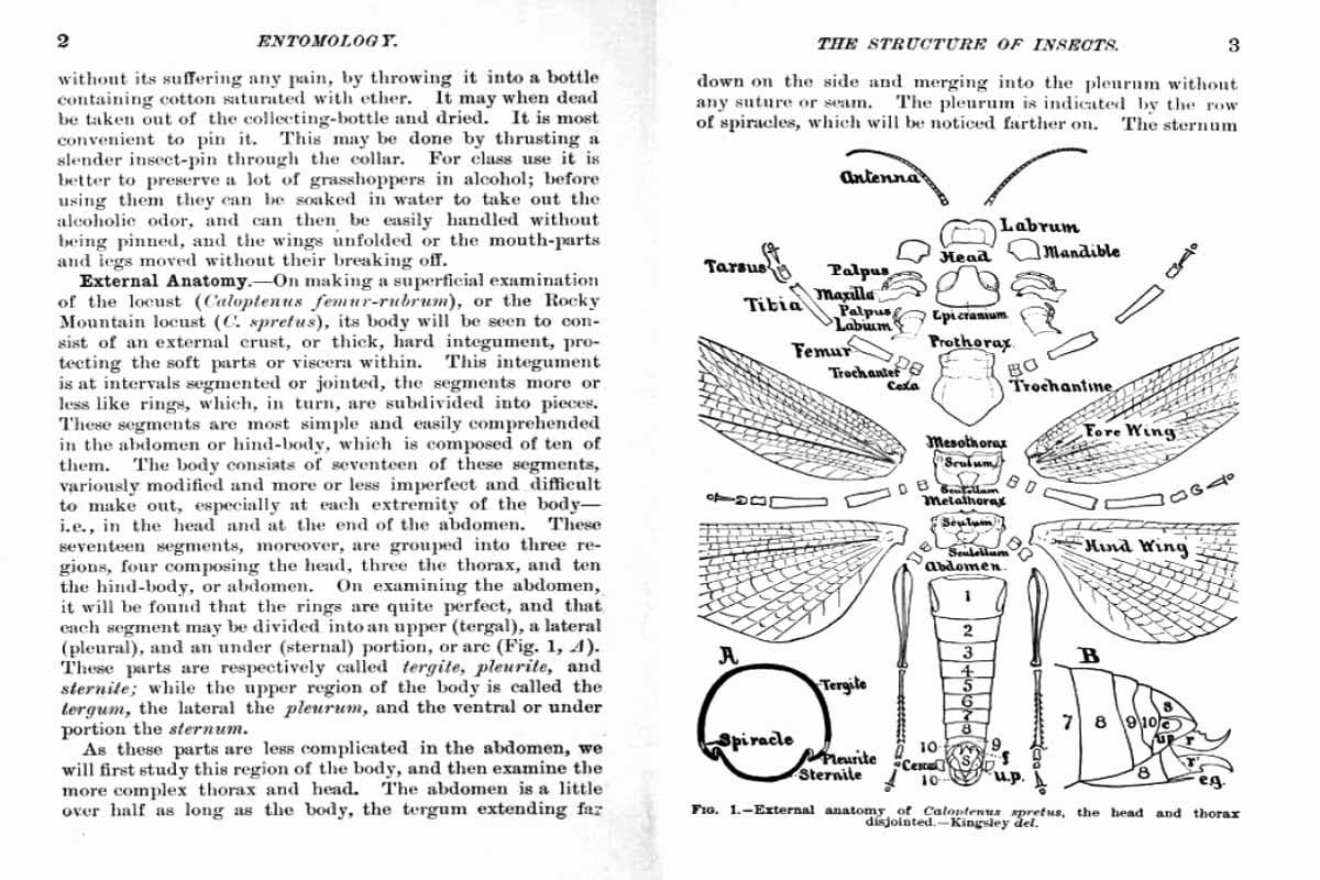 Entomology for Beginners ~ Free eBook